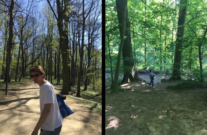 Het Zoniënwoud & Park van Vorst
